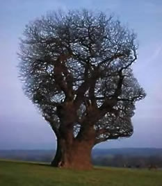 Imaginationtree